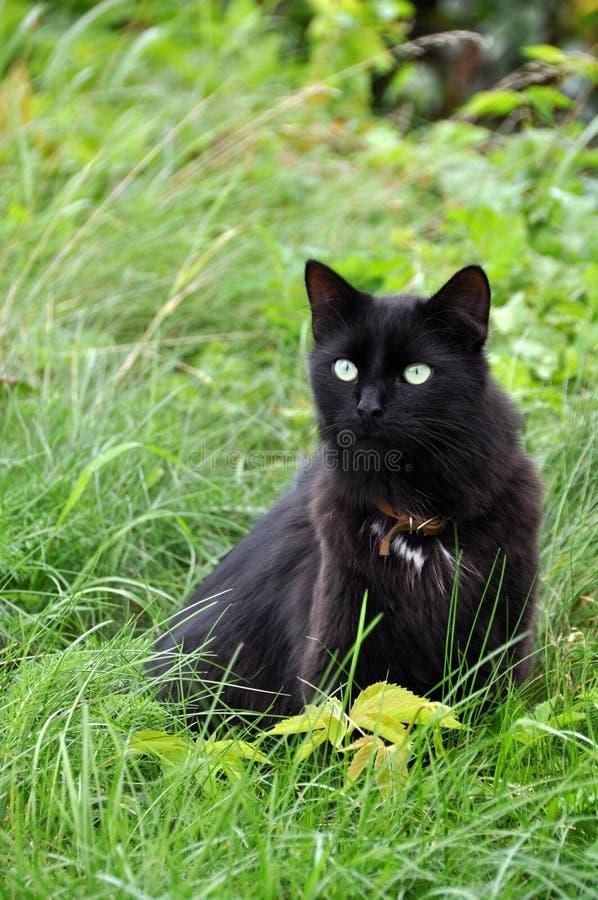 chat noir sur l 39 herbe verte image stock image du vert animal 33965351. Black Bedroom Furniture Sets. Home Design Ideas