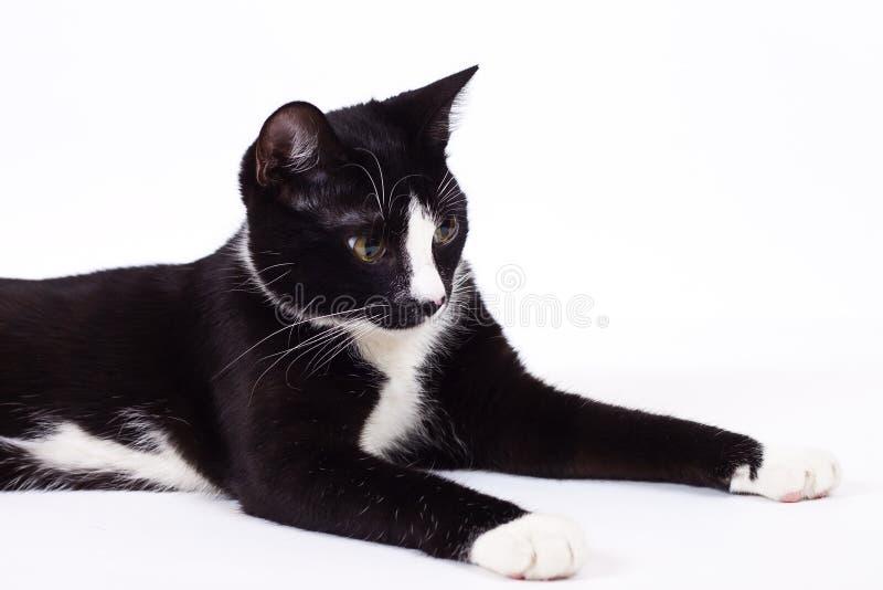 chat noir sur le fond blanc photo stock image du oeil fond 36916370. Black Bedroom Furniture Sets. Home Design Ideas