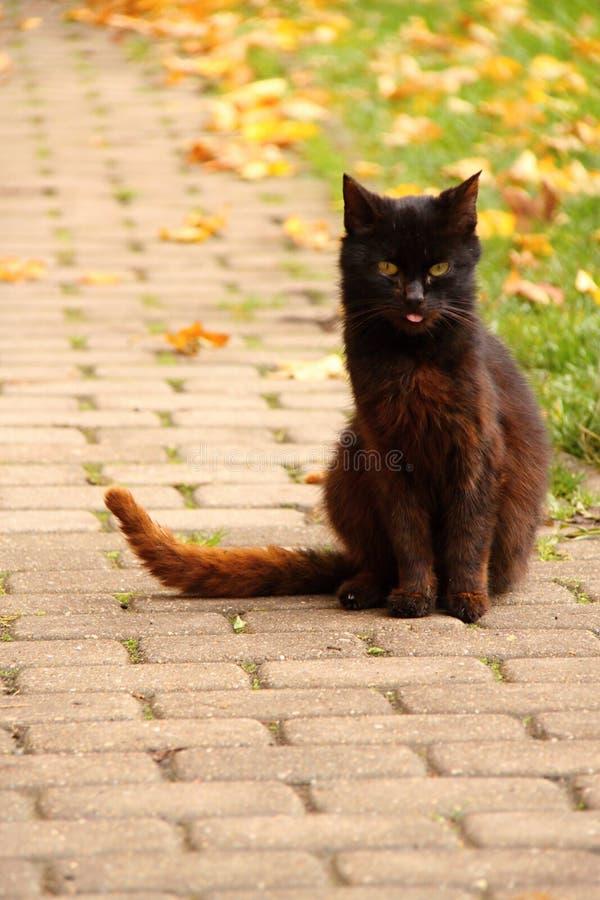 Chat noir sur le pavage photographie stock