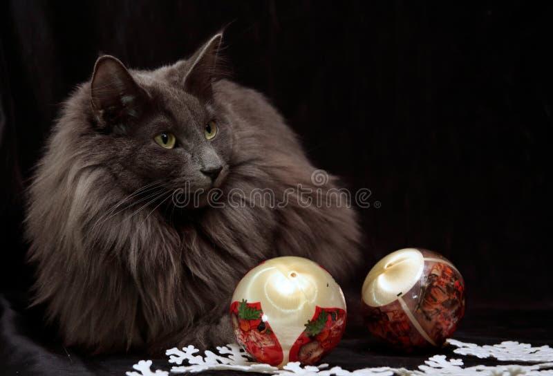 Chat norvégien de forêt femelle avec deux boules de Noël photographie stock
