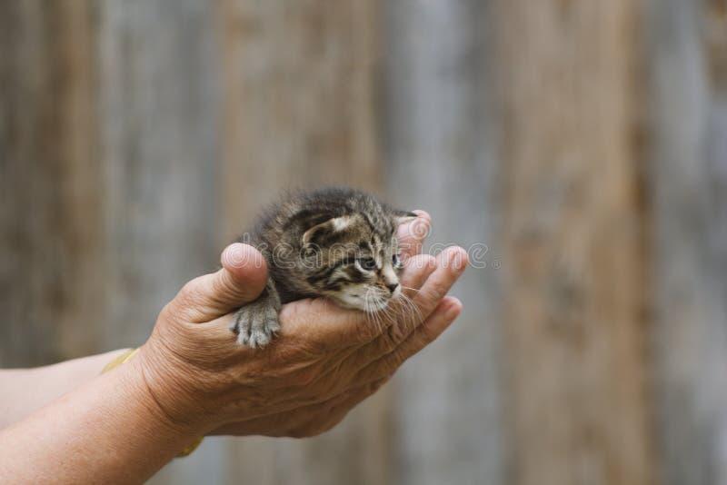 Chat nouveau-né de minou chez la main de la femme - scène rustique images stock