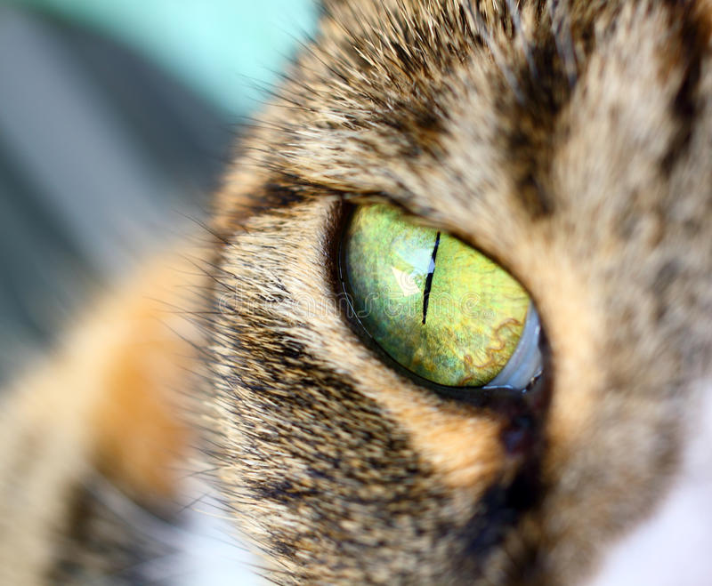 Chat - oeil images stock