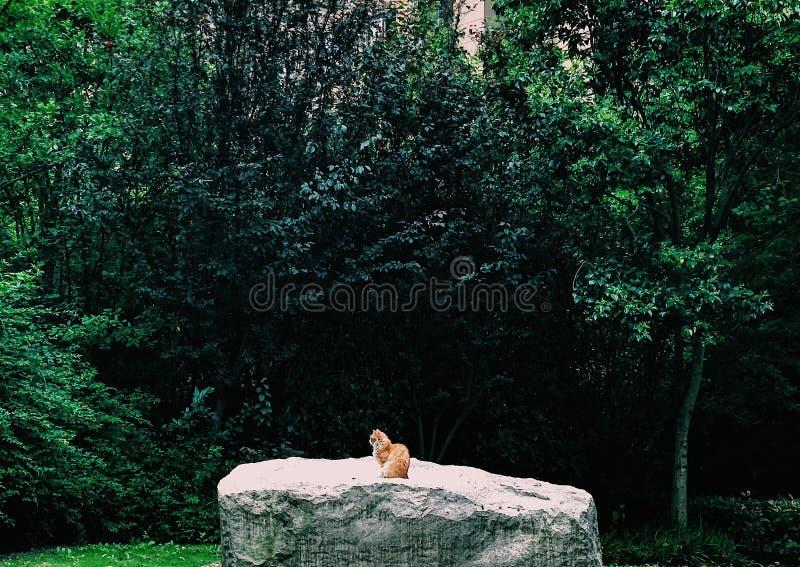 chat orange assis sur un rocher géant photographie stock libre de droits