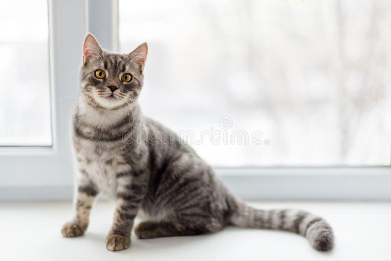 Chat paresseux se reposant sur le rebord de fenêtre Foyer sélectif photos stock