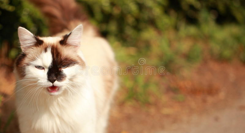 Chat parlant photo stock