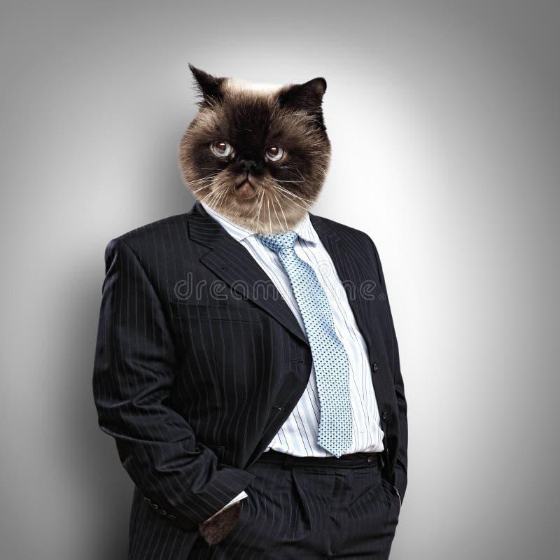 Chat pelucheux drôle dans un costume photo libre de droits