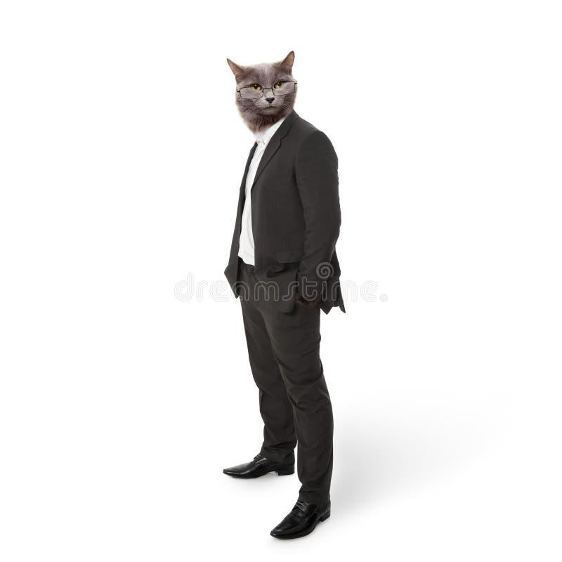 Chat pelucheux drôle dans un homme d'affaires de costume. collage photos stock