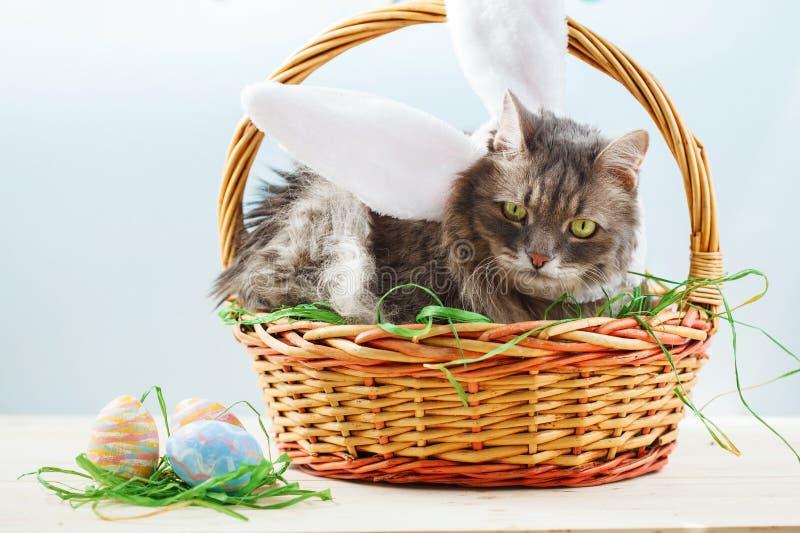 Chat pelucheux gris avec des oreilles de lapin dans le panier de Pâques avec des oeufs de pâques photos stock