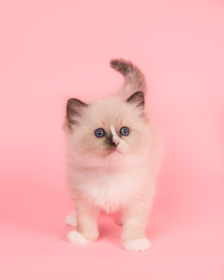 Chat pelucheux mignon de bébé de poupée de chiffon photos stock