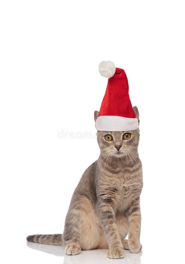 Chat posé adorable de Santa avec les yeux jaunes photo stock