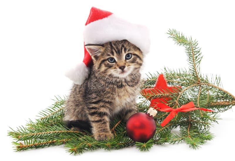 Chat près de l'arbre de Noël images stock