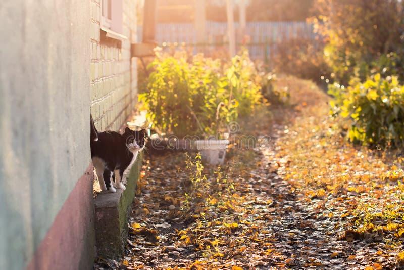 Chat près de la maison sur un fond de coucher du soleil et de feuillage jaune tombé par automne images stock