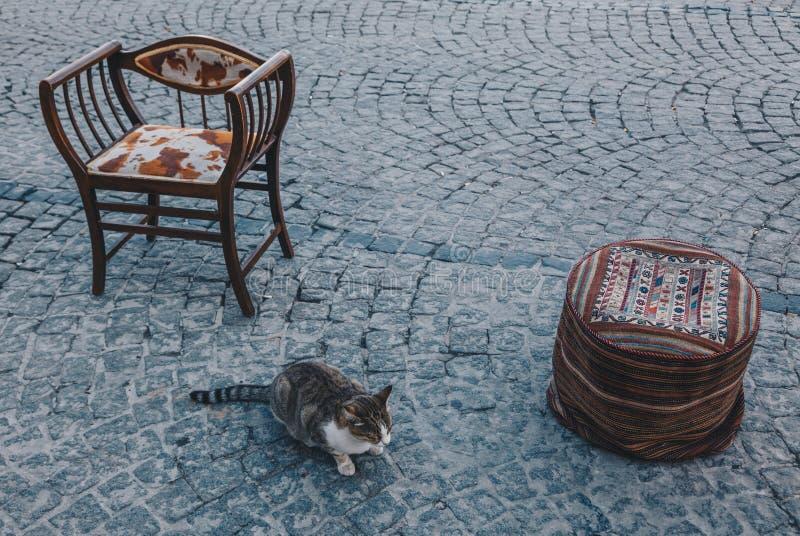 Chat prenant le repos sur la rue - tapis coloré et chaises décorées dans la ville d'Istanbul, dinde image stock