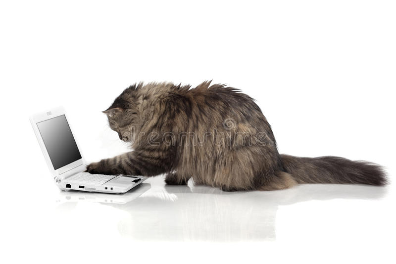 Chat qui fonctionne pour l'ordinateur portatif image libre de droits