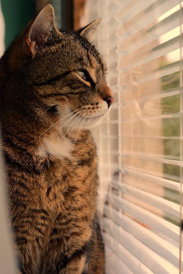 Chat regardant à l'extérieur l'hublot image stock