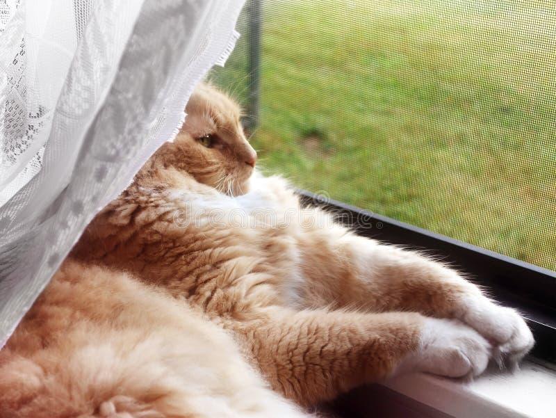 Chat regardant à l'extérieur l'hublot photo libre de droits