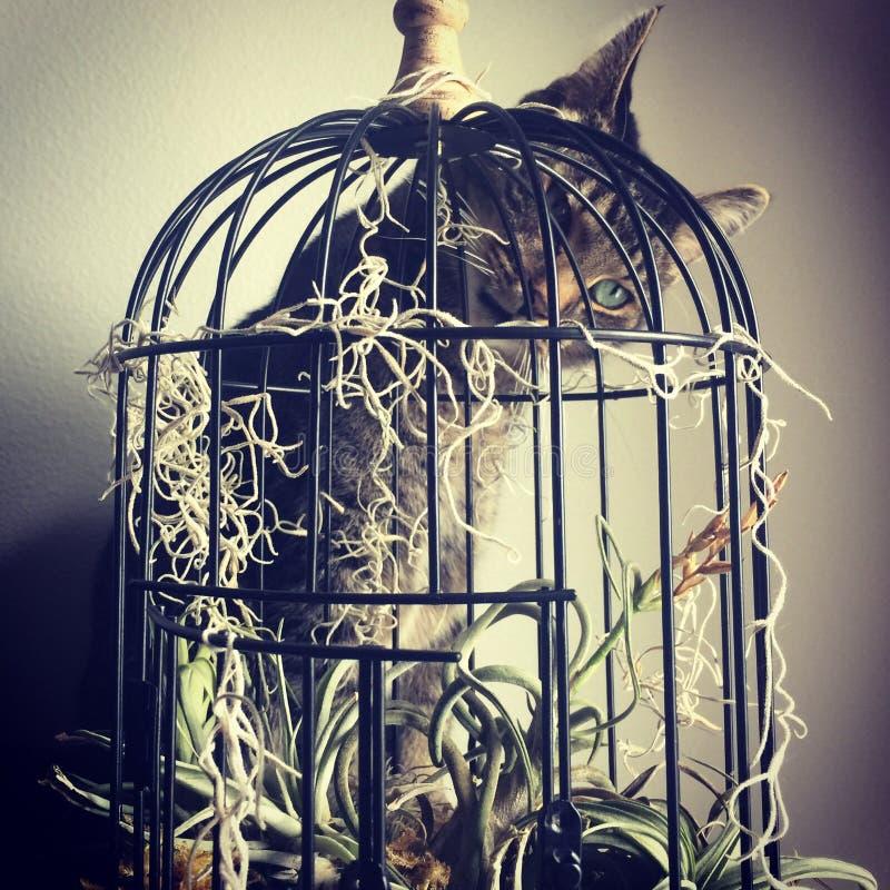 Chat regardant fixement par la cage à oiseaux photo stock
