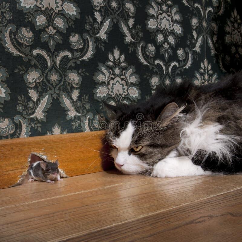 Chat regardant fixement une souris images stock