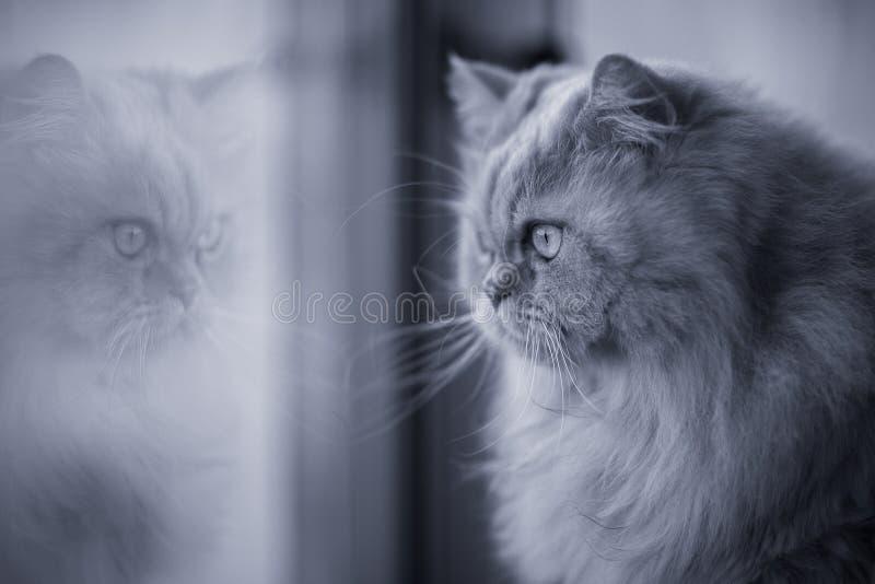 Chat regardant par la fenêtre photos libres de droits