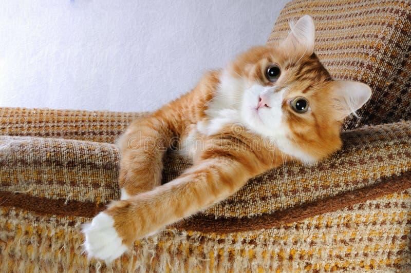 Chat rouge à la maison photo libre de droits
