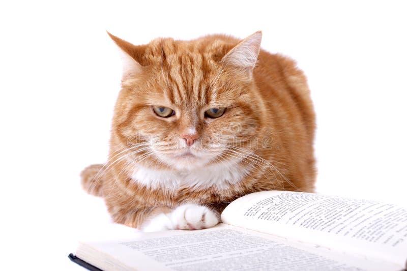 Chat rouge avec les yeux oranges image libre de droits