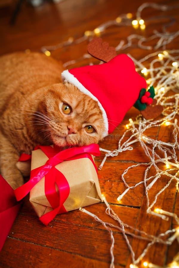 Chat rouge britannique dans le chapeau de Santa se trouvant avec une guirlande de Noël photo stock