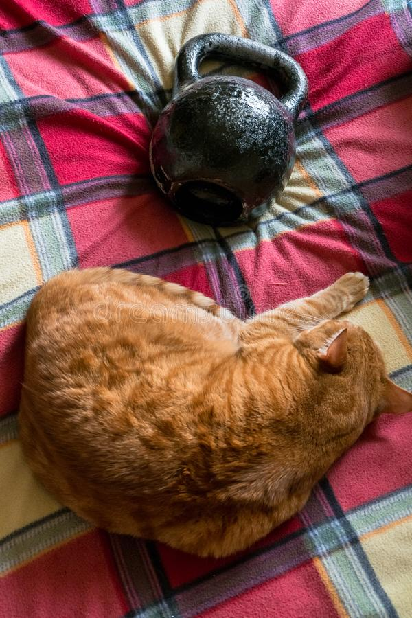 Chat rouge, dormant près de la norme 24 kilogrammes de kettlebell de fonte photo libre de droits