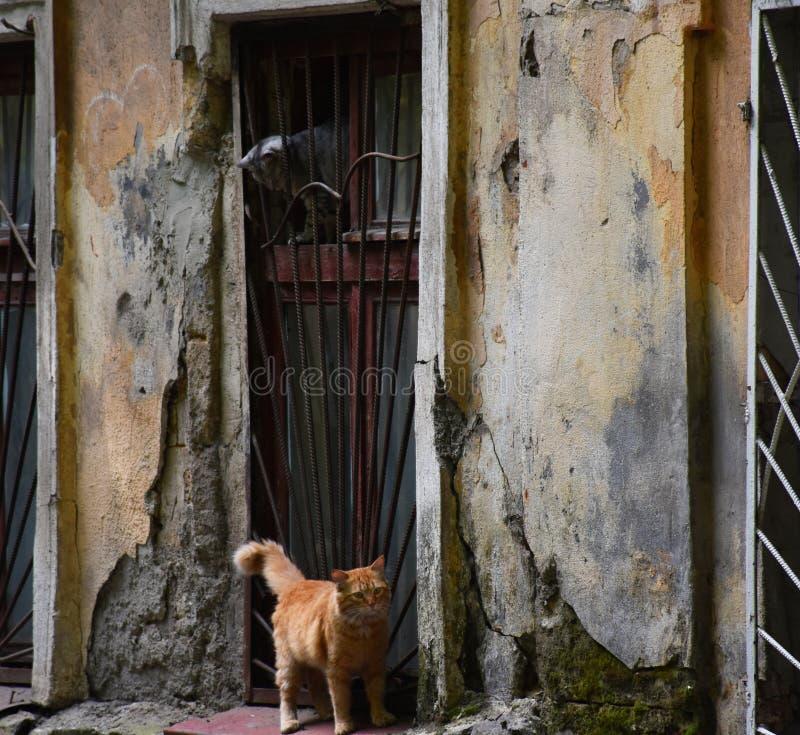 Chat rouge du chat A sur la rue images libres de droits