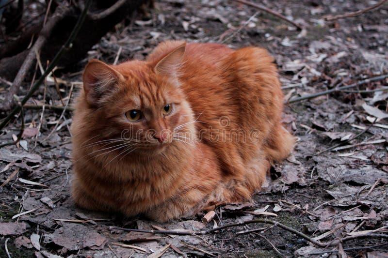 Chat rouge et automne images stock