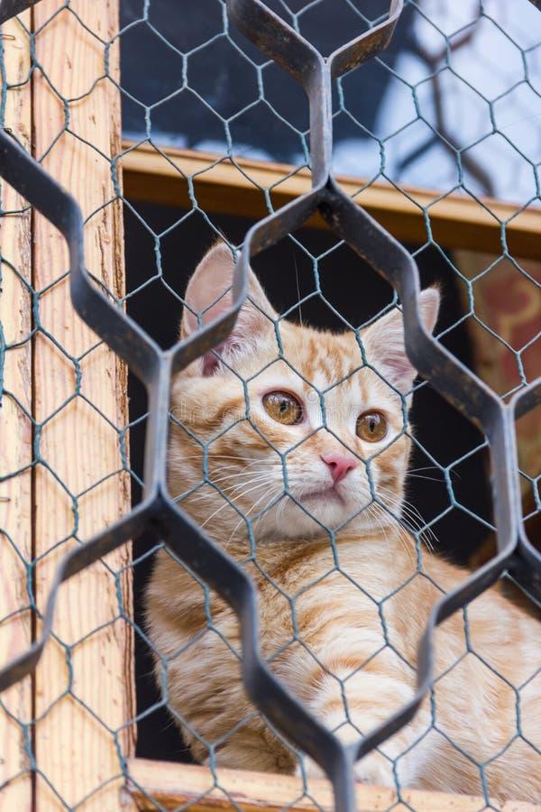 Chat rouge se reposant sur la fenêtre et les regards par la grille image stock