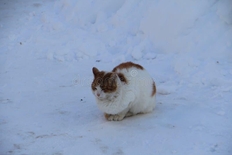 Chat rouge seul images libres de droits