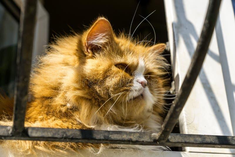 Chat rouge sur la fenêtre photos libres de droits