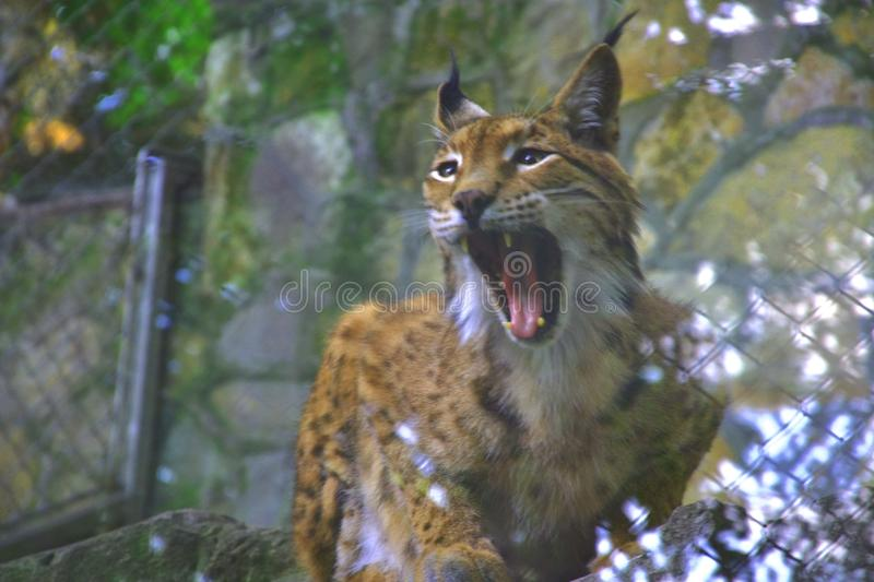 Chat sauvage photographie stock