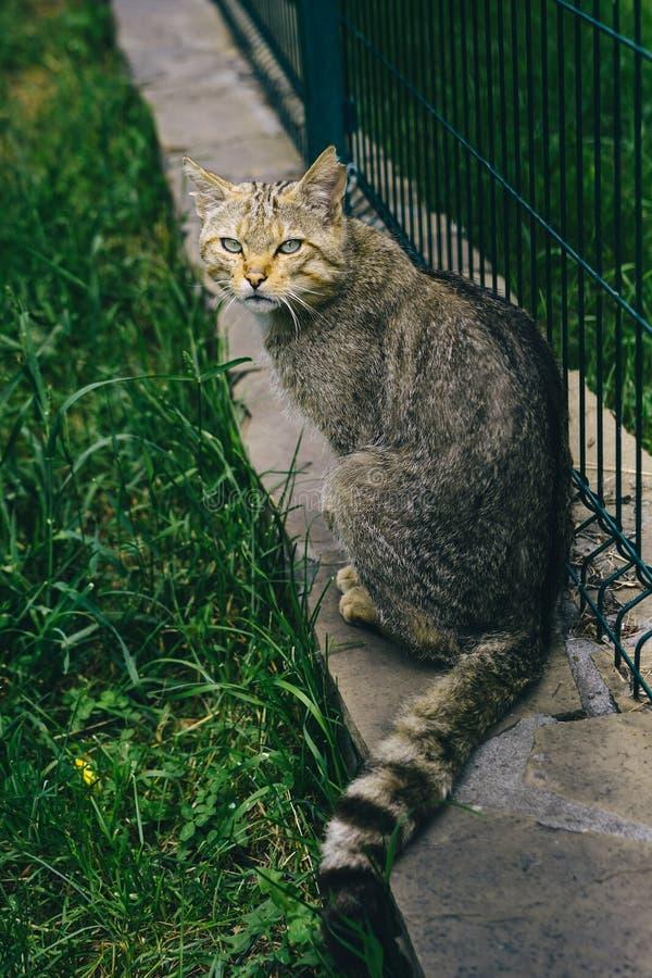 Chat sauvage dans le zoo Animaux sauvages mignons Zoo, faune photos libres de droits