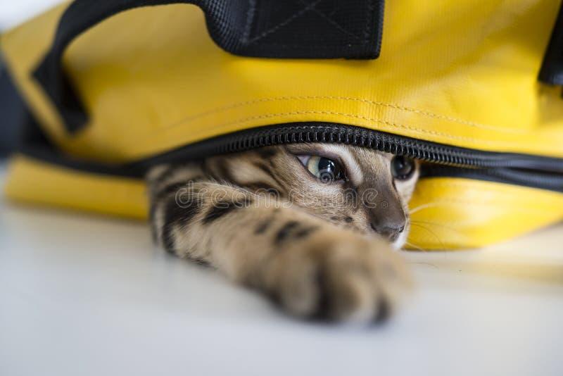 Chat se cachant dans le sac photographie stock libre de droits