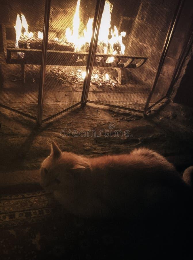 Chat se réchauffant par la cheminée photographie stock libre de droits