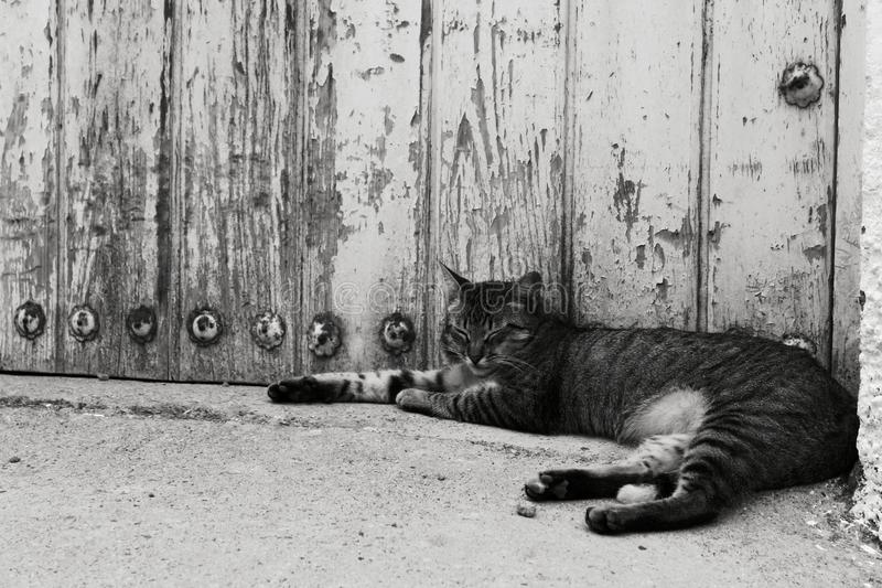 Chat se reposant dans la rue photo libre de droits