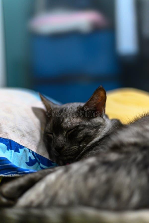 Chat se reposant dans un lit photo stock