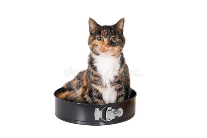 Chat se reposant dans un moule à gâteaux photos stock