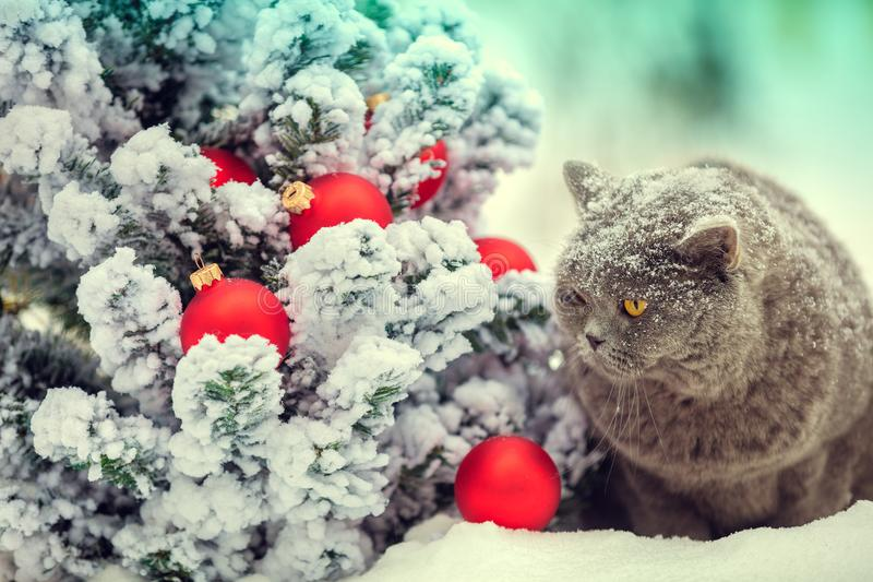 Chat se reposant sur la neige près de l'arbre de Noël photographie stock