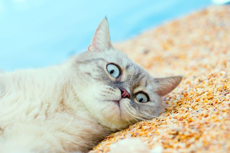 Chat se reposant sur la plage photographie stock