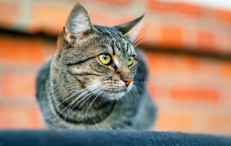 Chat se reposant sur le toit photo libre de droits
