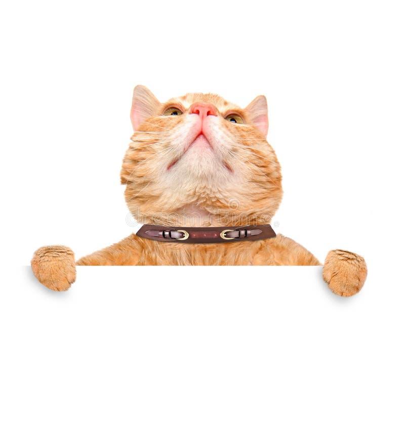 Chat se tenant dans sa bannière de blanc de pattes image libre de droits