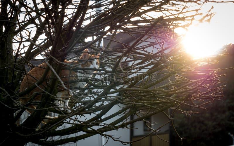 Chat se tenant sur un stree pendant le coucher du soleil image libre de droits