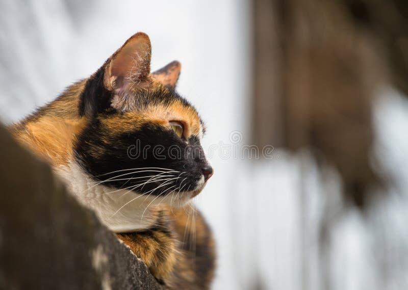 Chat se trouvant sur le mur et regardé autour photographie stock libre de droits
