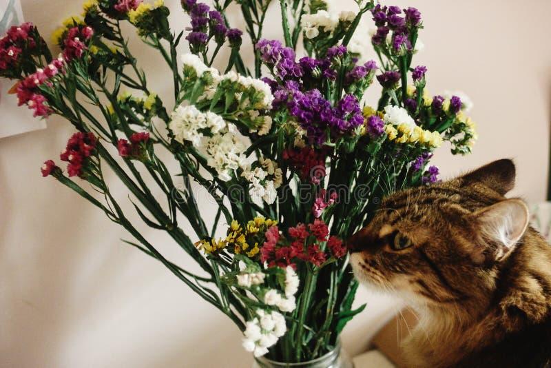Chat sentant les wildflowers étonnants colorés dans le vase sur le fond image stock