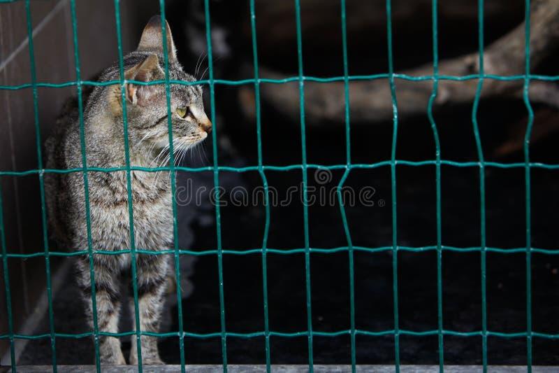 Chat seul dans l'abri photos libres de droits