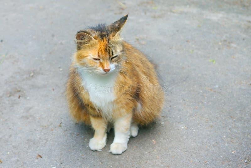 Chat seul de gingembre photos libres de droits
