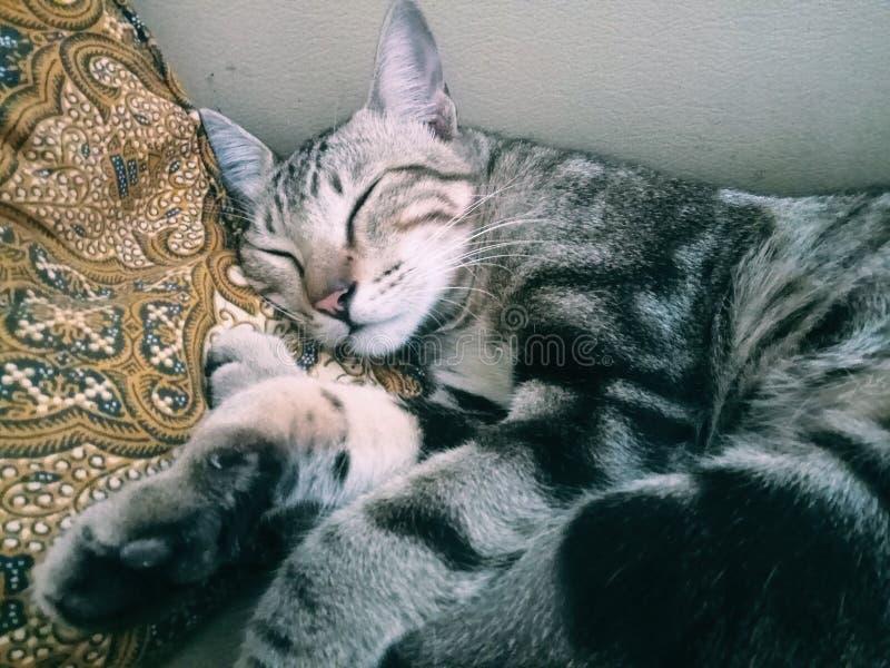 Chat somnolent photo stock
