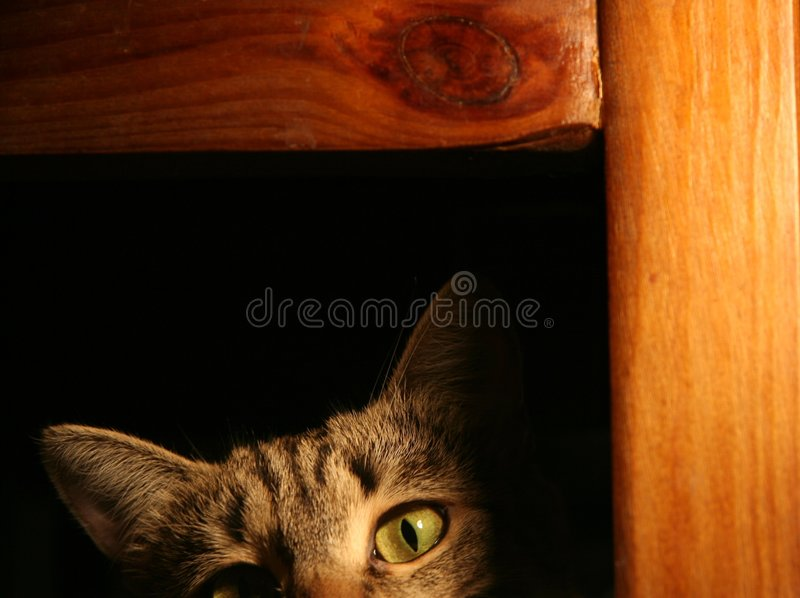 Chat sournois images stock